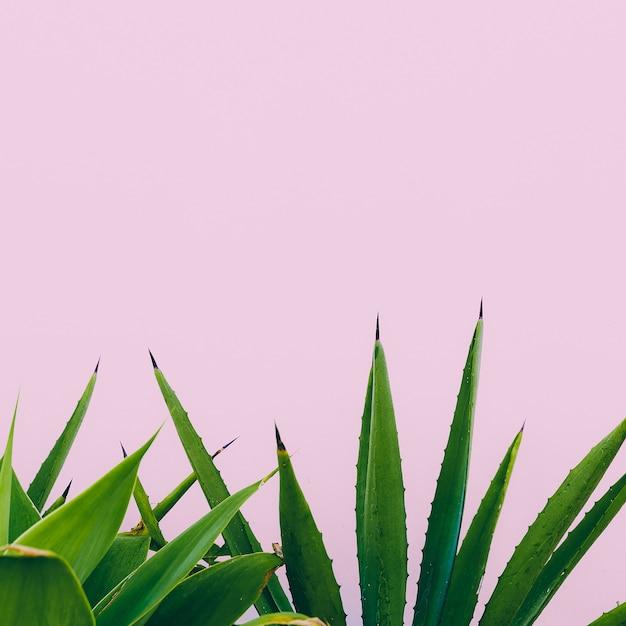 Plant o pink. outdoors. minimal design. fashion for prints Premium Photo