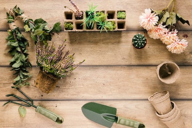 Plant; peat tray; flower; peat pot; succulent plant and gardening equipments on brown table Free Photo