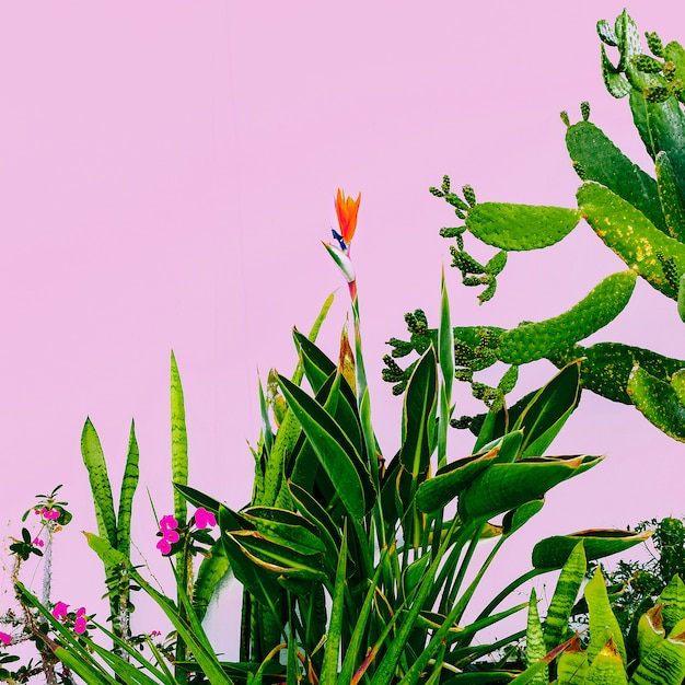 Plant on pink. outdoors. minimal fashion design. plants lover. green garden tropical mood Premium Photo