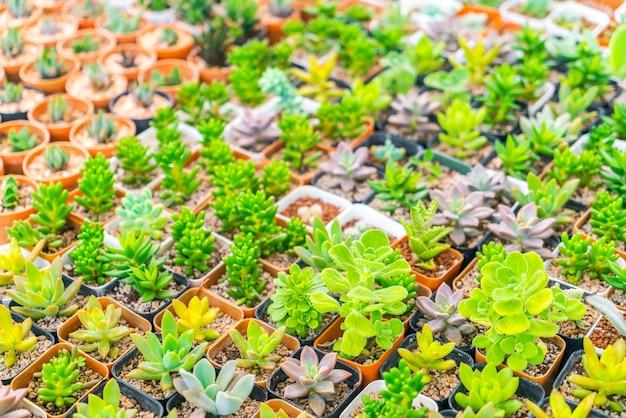 Plant succulent symmetry thorn dry Free Photo