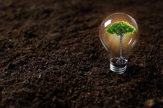 Plant tree, sapling growing up in light bulb Premium Photo