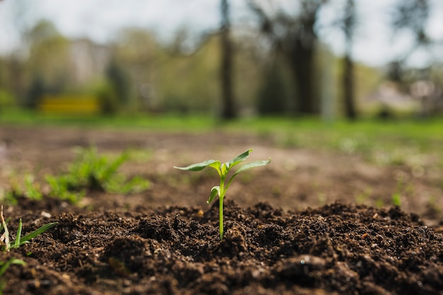 Planting concept in nature Free Photo