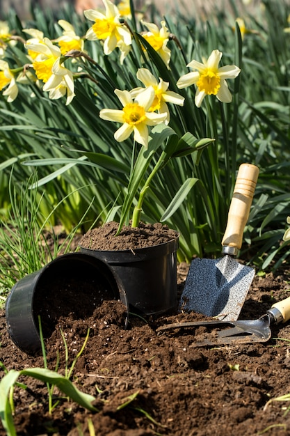 Planting flowers in the garden, garden tools, flowers Free Photo