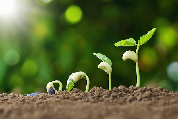 Planting seed grow step concept in garden and sunlight. agriculture idea Premium Photo