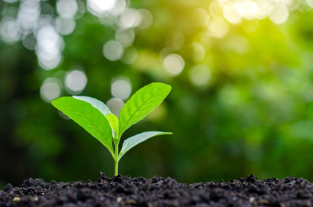 Planting seedlings young plant in the morning light on nature background Premium Photo