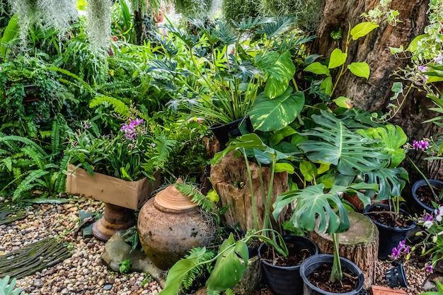 Planting tree decorate in garden Premium Photo