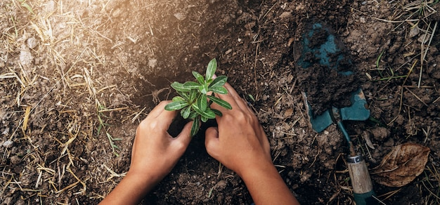 Planting tree in garden. concept save world green earth Premium Photo