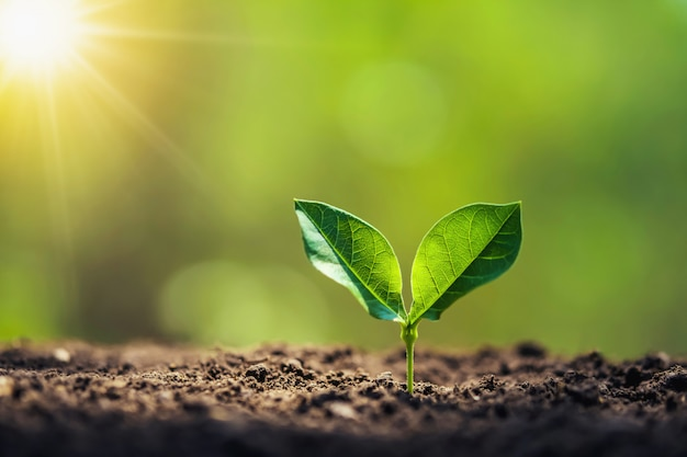 Planting tree in garden with sunrise. concept save world Premium Photo