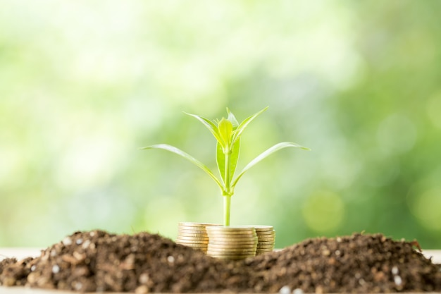 Planting trees on a coin pile with sunlight Free Photo