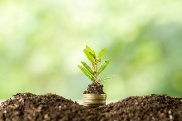 日光でコインの山に木を植える 無料写真