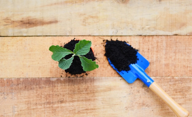 Planting young tree or flowers in pot with soil on wooden background, works of gardening tools small plant Premium Photo
