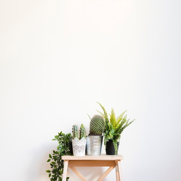 Plants and cactus on stool Premium Photo