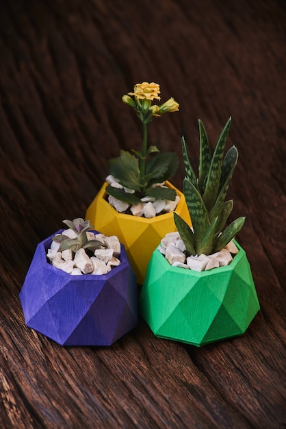 Plants in colored concrete pots on wooden background. clean photo. violet, green and yellow post Premium Photo