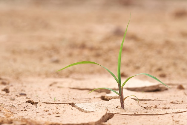 The plants grow on the dry ground. plants try to live the next life. environment Premium Photo