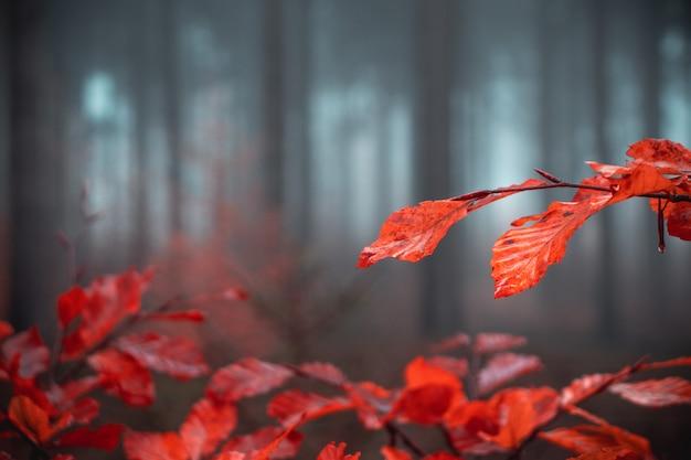 Растения с оранжевыми листьями в лесу Бесплатные Фотографии