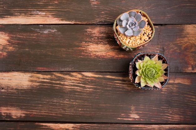 Plants on wood table with copy space Free Photo