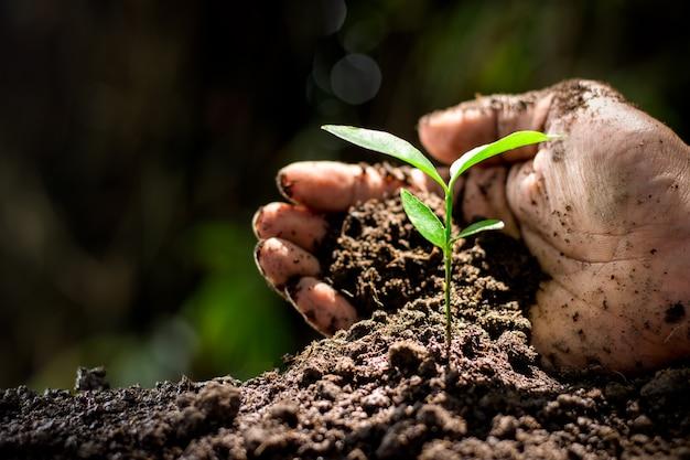 Plants Premium Photo