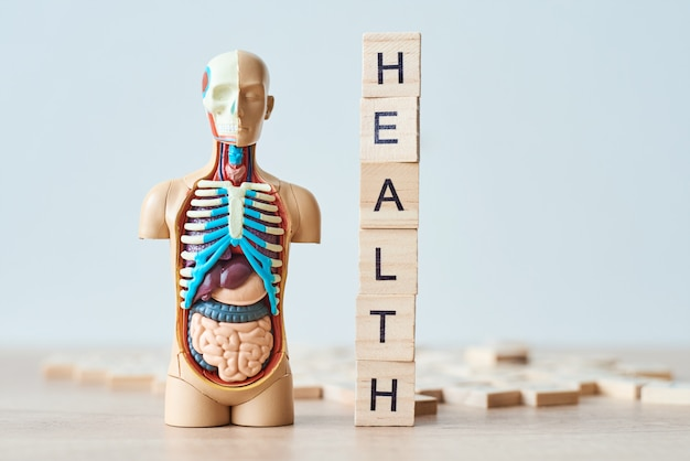 Plastic man dummy mannequin with internal organs and word health made of wooden blocks Premium Photo