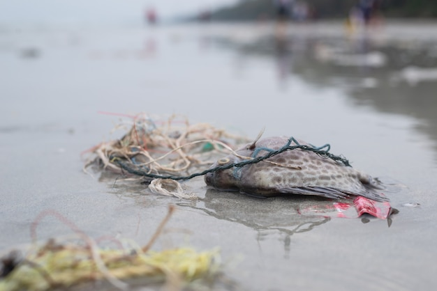 Plastic pollution problem, death fish on the beach with dirty plastic garbage Premium Photo