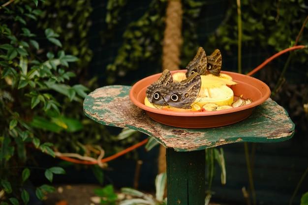 日光の下で緑に囲まれたフクロウチョウと果物でいっぱいのプレート 無料写真