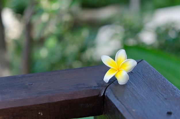 Plumeria flower Premium Photo