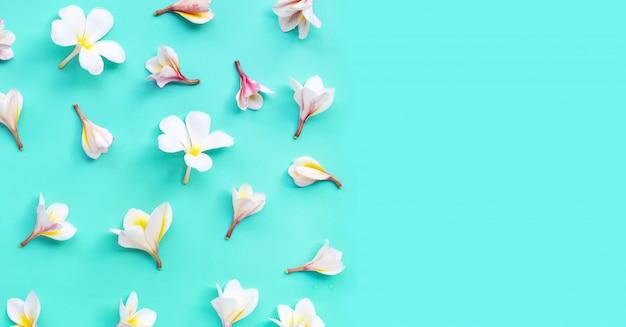 Plumeria or frangipani flower on blue Premium Photo