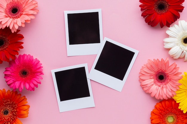 Polaroid photos with gerbera flowers Free Photo
