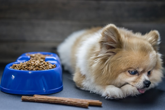 Pomeranian Dog Sitting Lonely On The Table With Food And Snack In