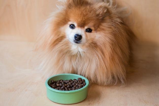 Померанский шпиц ест. погладьте сухой корм в керамическом зеленом шаре на пастельном синем свете с собачьими лапками, пушистыми ножками Premium Фотографии