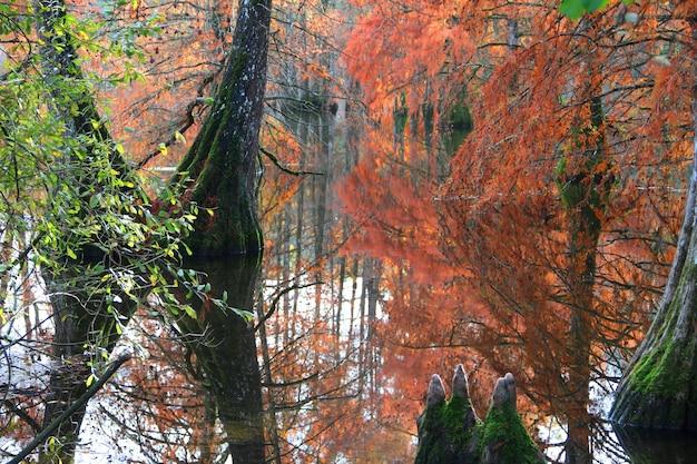 森の中の赤と緑の木々に囲まれたポン 無料写真