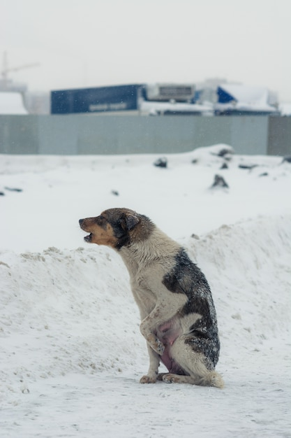 Poor abandoned dog in desperation in winter. Premium Photo