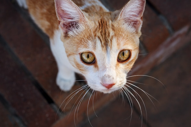 Premium Photo Poor Red Homeless Cat With Sad Yellow Eyes
