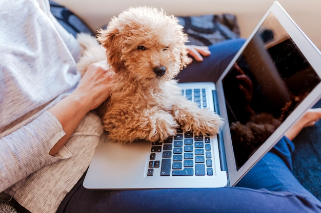 Portrait of a cute brown toy poodle with his young woman owner at home. using laptop. daytime, indoors. Premium Photo