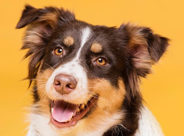 Portrait of a cute dog Free Photo