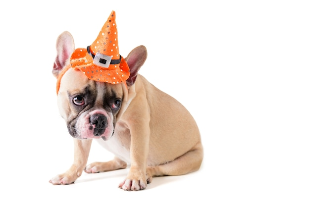 Portrait of cute french bulldog with hat halloween isolated Premium Photo