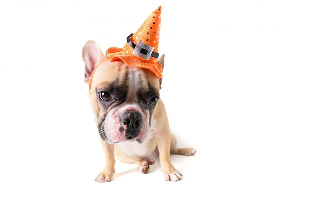 Portrait of cute french bulldog with hat halloween Premium Photo