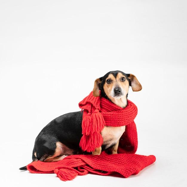 Ritratto di simpatico cagnolino coperto di sciarpa Foto Gratuite