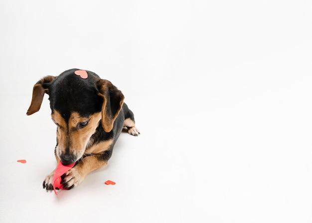 Ritratto di cucciolo carino con copia spazio Foto Gratuite
