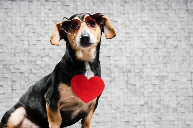 Ritratto di carino piccolo con occhiali da sole Foto Gratuite