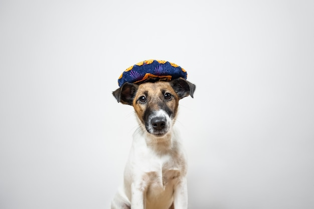 Portrait of cute puppy in mexican traditional hat posing on white  smooth fox terrier dog dressed up in hat hat sitting in isolated Premium Photo