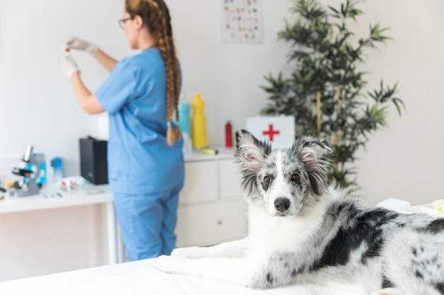 Portrait of a dog with female veterinarian standing in the background Free Photo