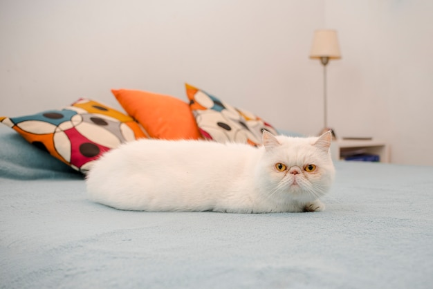 Portrait of domestic kitty cat Free Photo