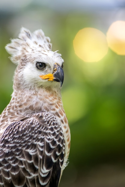 Portrait of a eagle symbol the hunting Premium Photo