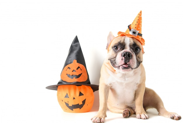 Portrait of french bulldog with hat halloween and smile Premium Photo
