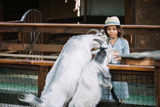 Portrait of a girl feeding two goats in the barn Free Photo