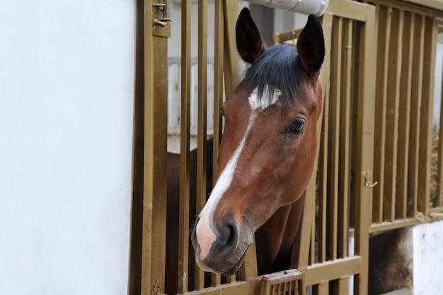 Portrait of  horse in stall box. Premium Photo