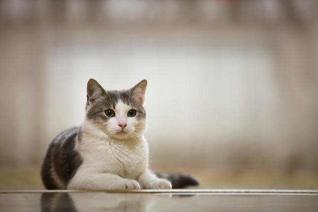 Portrait of nice white and gray domestic cat with big round green eyes laying relaxed outdoors on blurred light sunny . animal world concept. Premium Photo