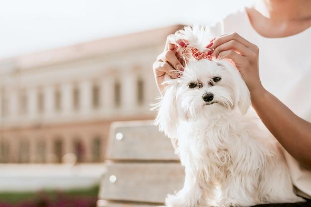 Portrait of nice young maltese dog Premium Photo