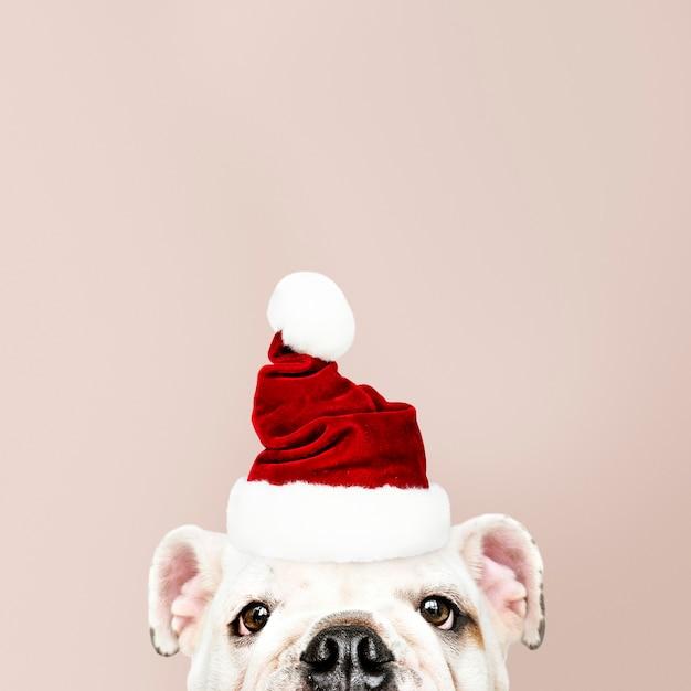 산타 모자를 쓰고 귀여운 불독 강아지의 초상화 무료 사진