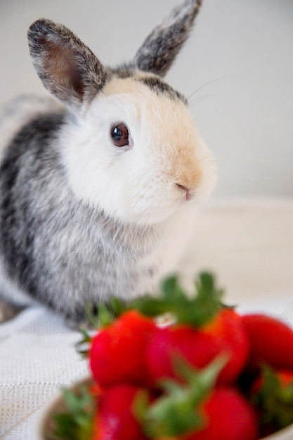 portrait of a cute bunny rabbit photo free download